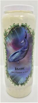 Bougie Baleine