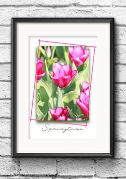 "Poster ""Springtime | Tulips Pink"""