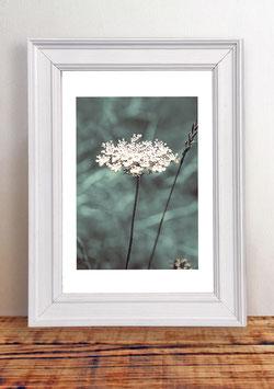 """Poster """"Fleur de Bretagne No. 1"""""""