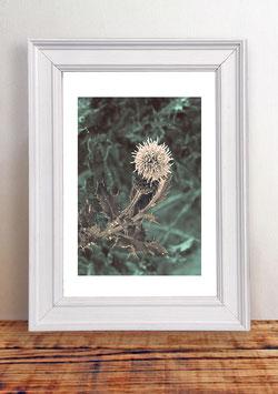 """Poster """"Fleur de Bretagne No. 2"""""""
