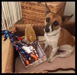 ★  Hundeweihnachtsgeschenkbox für große und kleine Doggys ★
