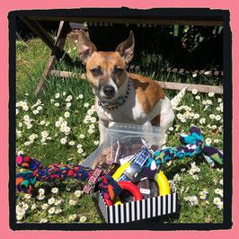 ♥ Geburtstagsgeschenkbox für große und kleine Doggys ♥