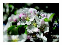 Allgäuer Blütenessenzen Kartenset 33 Blütenkarten