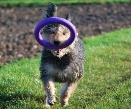 DOG Puller RINGE