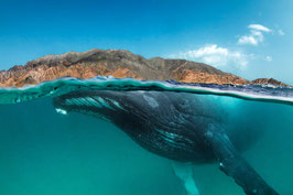Humpback encounter