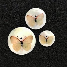Perlmuttknopf Schmetterling