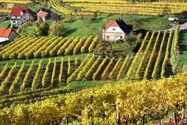 Weinbau in der Wachau