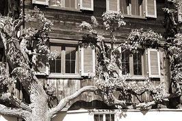 Montafoner Haus