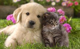 Tierkommunikation, Vermisste Tiere finden oder auch Gesundheitscheck