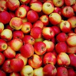 Sack Bio Äpfel mit 10 Stück