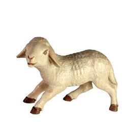 Lamm zu Krippenfiguren mehrfach gebeizt