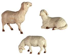 Schafe zu Krippenfiguren gebeizt