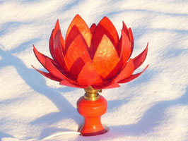 rote Lotusblüte