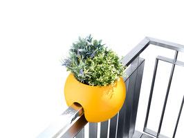 rephorm ballcony bloomball