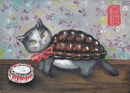 Norbert the turtle cat