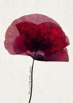 To the Mohn and back | Postkarte