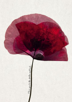 Poster - To the Mohn and back