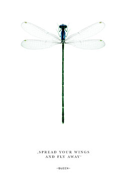 Libelle / Spread your wings ... | Postkarte