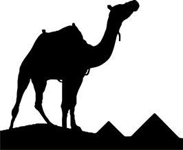 Camello y Pirámides pegatina