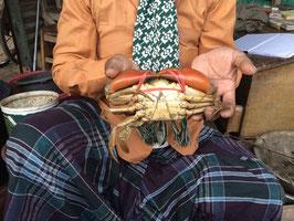 業務用天然青蟹(マッドクラブ mud crab)     1パック15kg