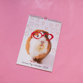 2020 Guinea Pig Calendar