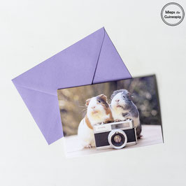 Photographer Piggies Greeting Card (1 card)