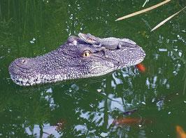 Krokodilskopf