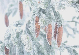 Postkarte Zapfen im Frost