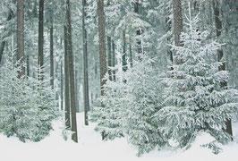 Postkarte Winterwald
