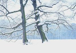 Postkarte Verschneite Baumriesen