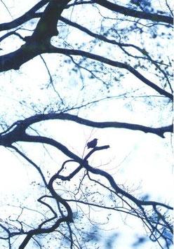 Postkarte Bird