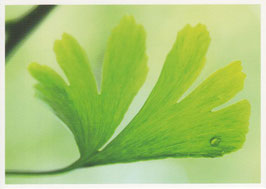 Postkarte Ginkgo-Blatt
