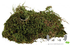 Trixie's Terrarium mos