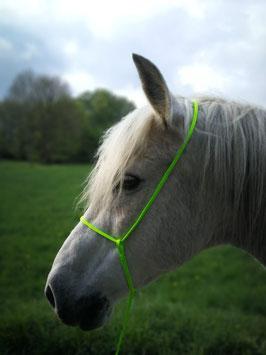Horsemanship Halver Wunderkiste