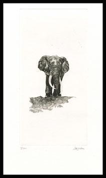 Estampe éléphant