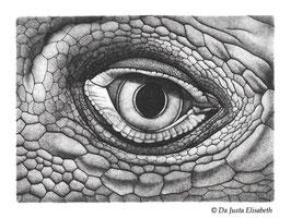 Estampe oeil d'iguane