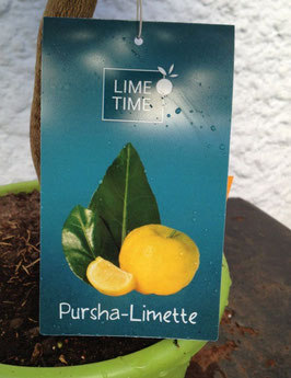 Pursha Limette