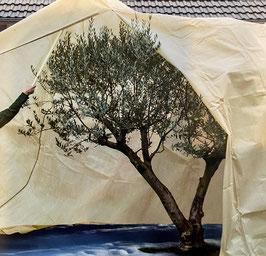 Vlieshauben Mediterran XXXL EXTREME für Olivenbäume mit 140g/m2  H350cm DM250cm