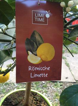 Römische Limette