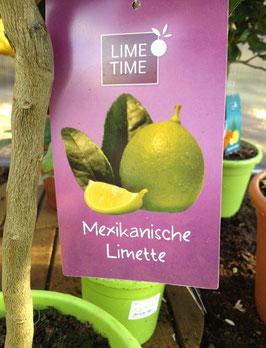 Mexikanische Limette