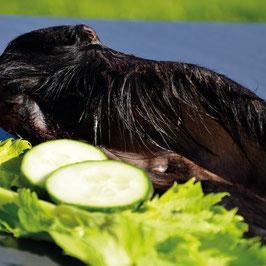 Rinderohr frisch mit Muschel und Haaren