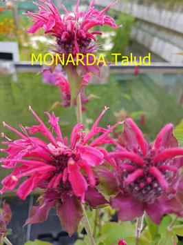 MONARDA Talud AGM
