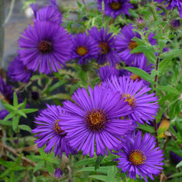 ASTER n.a.Helen Picton AGM