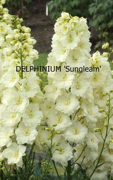 DELHINIUM Sungleam