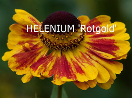 HELENIUM Rotgold