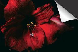 Orchidee-Induktionsschutz