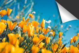 Frühling-Induktionsschutz