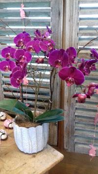 Orchidee lila im Dekotopf