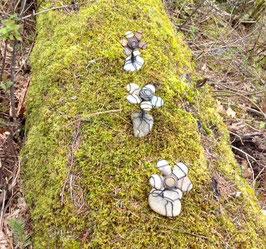 Bloomin' Rocks