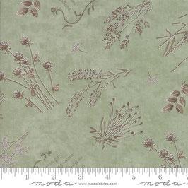 Prairie grass - erbe fondo verde
